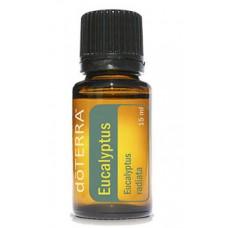 Aceite de Eucalipto - Eucalyptus 15 ml